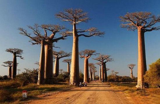 全称马达加斯加共和国