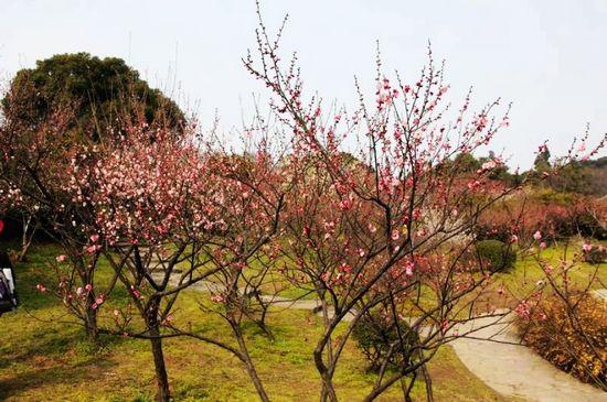 梅花带来春天的气息,也催动了人们踏青游春的脚步.