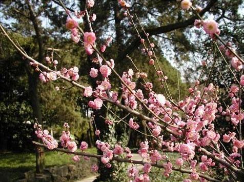 无锡梅园; 梅花; 梅园风景区,无锡旅游景点