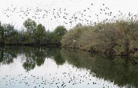 尚湖湿地公园-江苏五大国家城市湿地公园图片