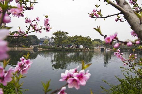 三月桃花盛开地