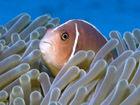 澳大利亚大堡礁的迷人海洋生物