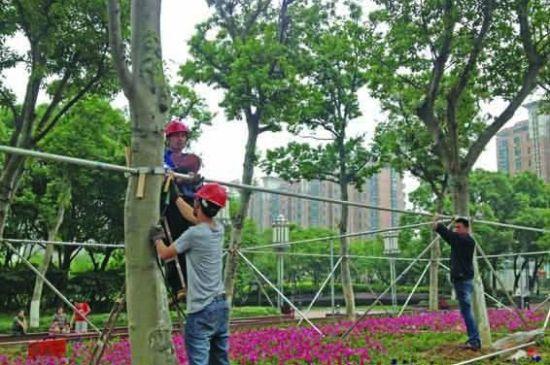 公园里来往人多,首先要保障安全,还要保障大树能长得好,木头支撑难看