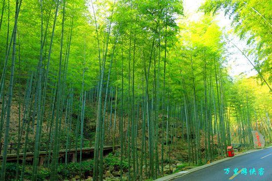 游宜兴竹海风景区 感受绿意盎然