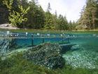 """奥地利""""水珍珠""""绿湖水下公园"""