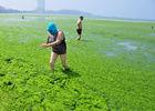 青岛市民不惧浒苔带面罩海中消暑