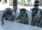 无锡动物园防暑降温度夏有凉方