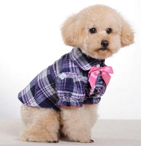 动物的衣服-动物的衣服画法-可爱动物服装-儿童动物