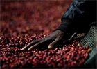 纪实摄影:顶级咖啡的诞生