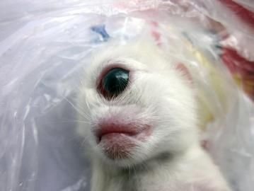 四川出现天眼猫
