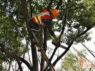 锡城冬季修剪树木