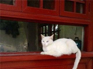 故宫收留猫保安