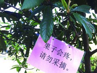 居民卖萌标语护果