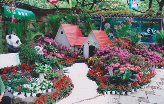 杜鹃花展示区