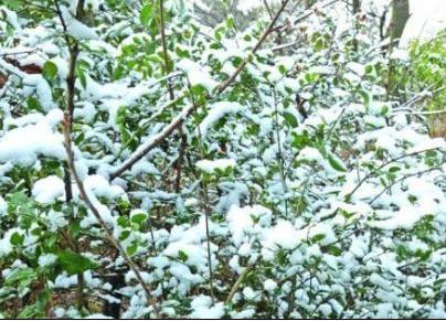 无锡落今冬首场雪
