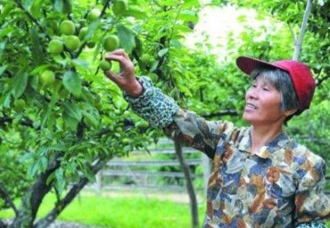 果农微信卖水果