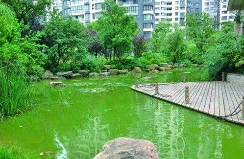 小区水景污染