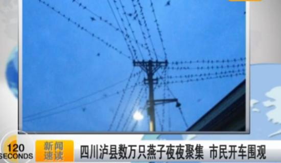 视频:数万只燕子夜夜聚集市民开车围观